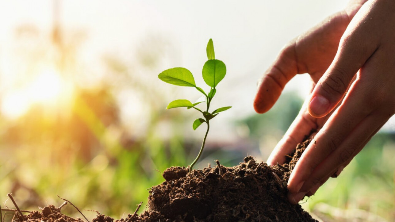 hand of children planting small tree in garden with sunset. concept green world